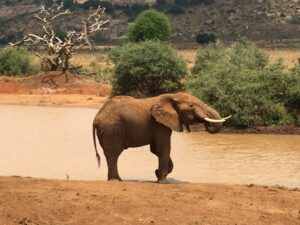 Elefante nello Tsavo Est in Kenya