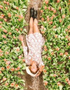 Scatto dall'alto nel campo di tulipani a Lisse