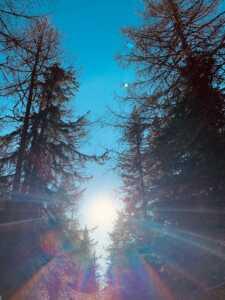 Sole tra gli alberi Madesimo
